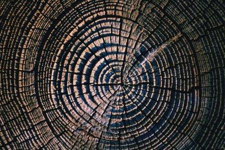 redwood_tree_rings